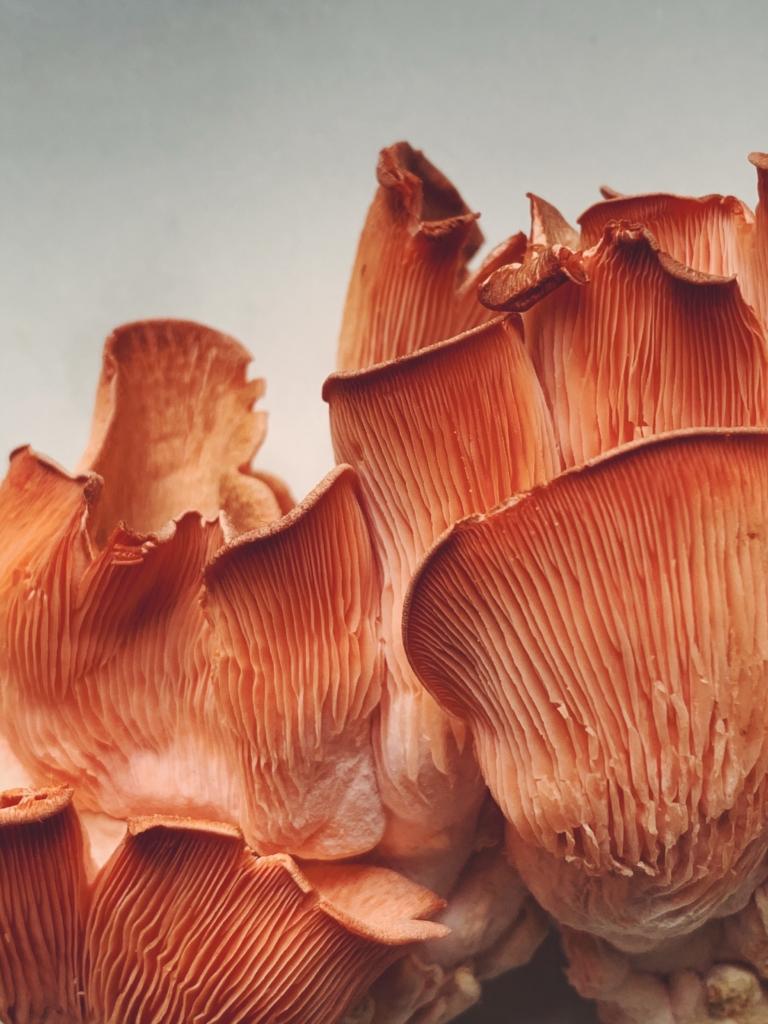 Rainbo Mushrooms + Mushroom Bon Bons